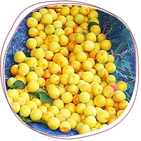 自然落下した完熟梅で作る梅酒